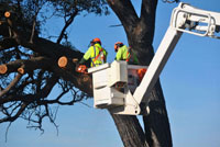 We have professional tree removal equipment for the toughest jobs.