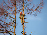 American Aerial Tree Experts can handle the tallest tree.