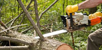 We promptly remove trees - call us 24/7.